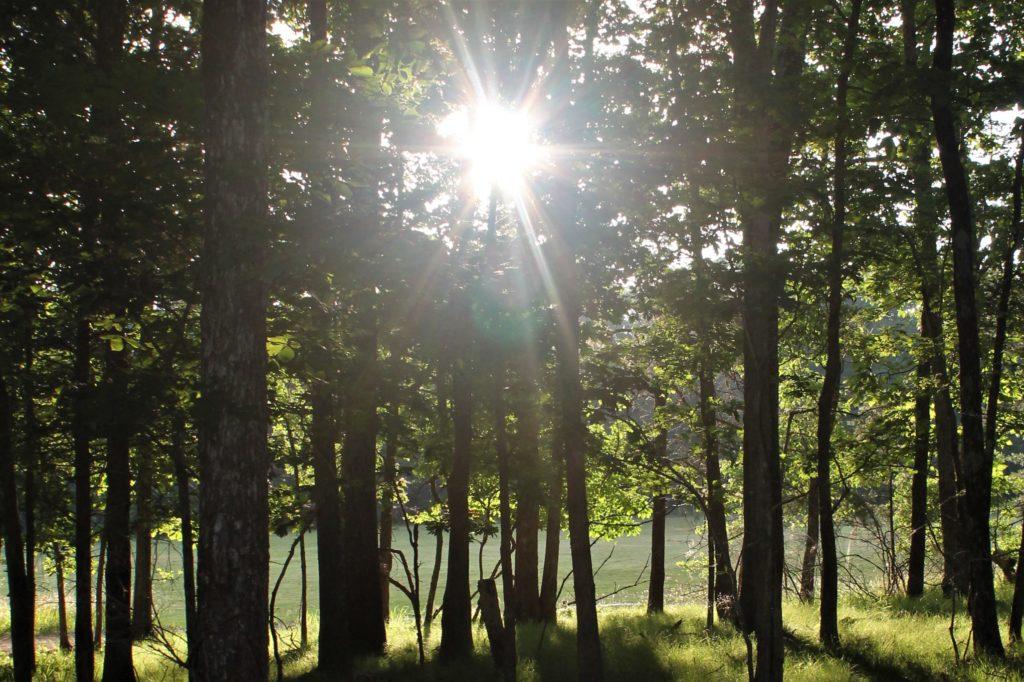 C5 camp sunlight graphic original 3